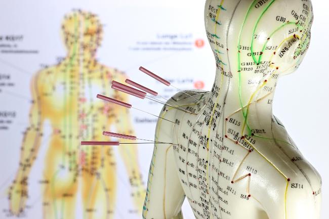 Organigram van meridianen in acupunctuur op een oefenpop en een tekening.